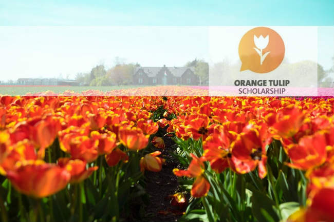 Orange Tulip Scholarship 2020-2021 | Foto: Owen Williams, via Unsplash